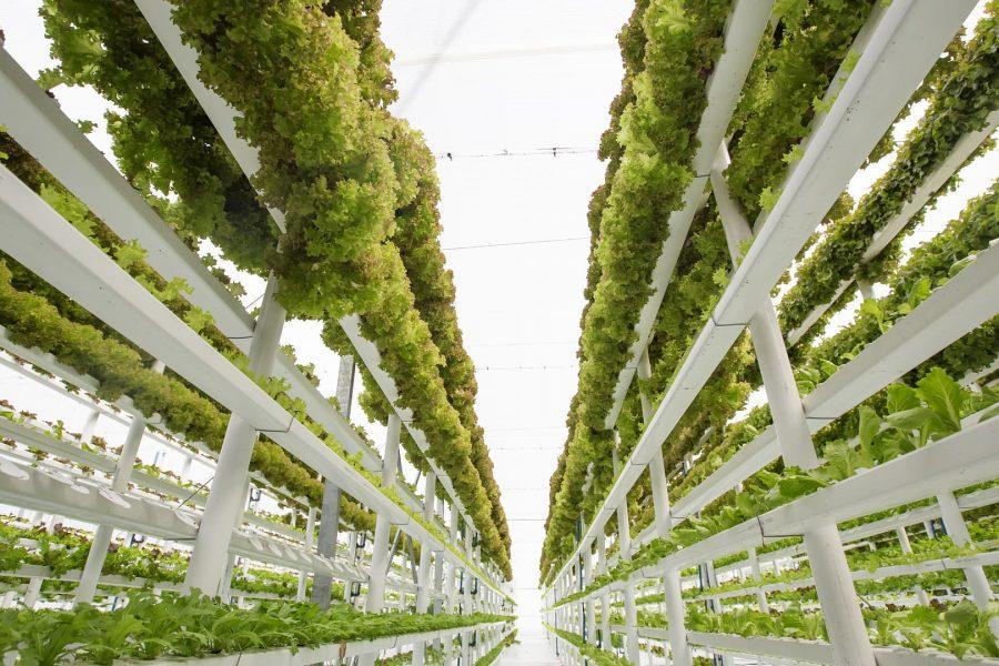 Landwirtschaft der Zukunft: Ackerbau und Viehzucht im Hochhaus