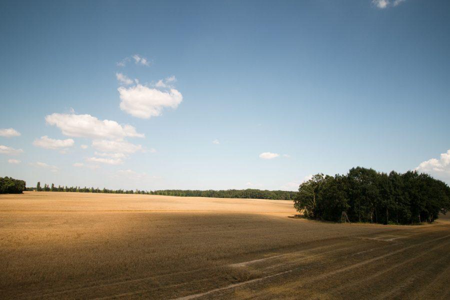 Lebensmittel produzieren. Regenerative Landwirtschaft.