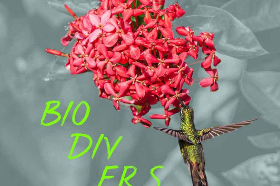 Biodiversität: ein Handbuch für Entscheider*innen